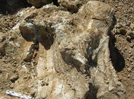 Çorum'da Dev Gergedan Fosili Bulundu