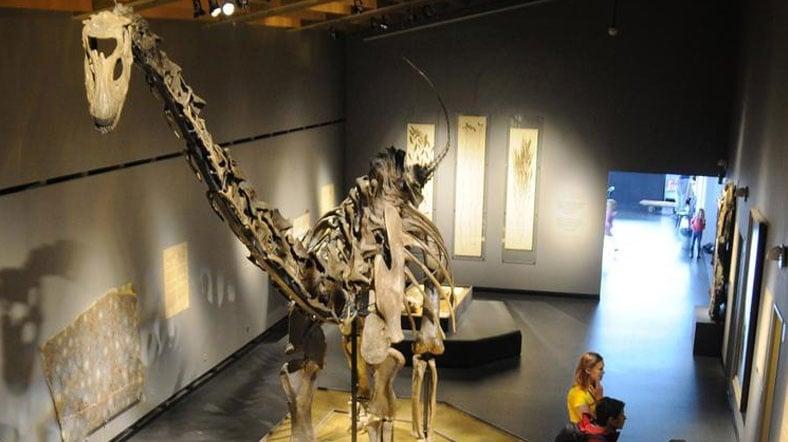 150 Milyon Yıllık Dinozor Sergileniyor