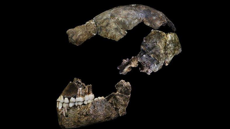 Homo naledi kafatası. [Fotoğraf: John Hawks]