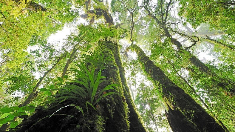 Dünyada 3 Trilyon Ağaç Var