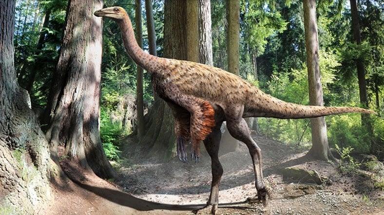 Devekuşuna Benzeyen Dinozor Bulundu