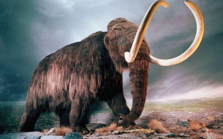 Bilinen En Eski DNA Mamutlardan Elde Edildi
